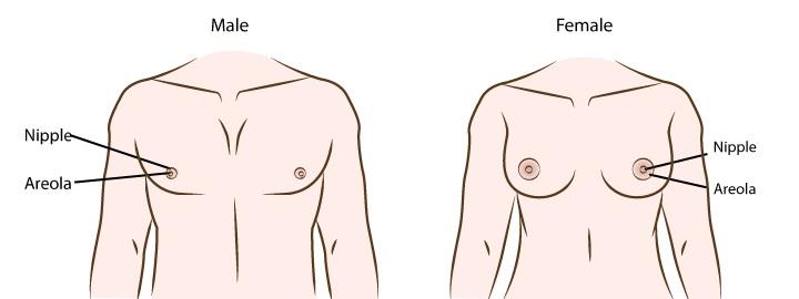 Nâng ngực cho người chuyển giới